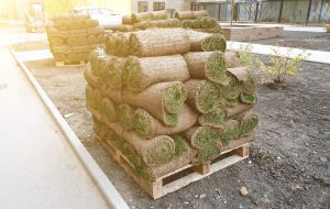 Lawn rolls stacked on pallet in city yard. Concept of preparation for ennobling of urban environment